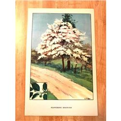 1920's Flowering Dogwood Color Lithograph Print