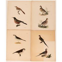 Early American Bird Prints  (113216)