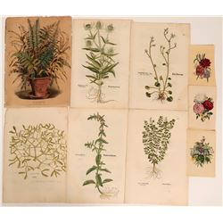 Early Flower Prints  (113232)