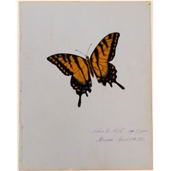 Butterfly by Arthur C. Nahl.  (117451)