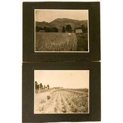 Large California Agricultural Photos (2)  (90304)