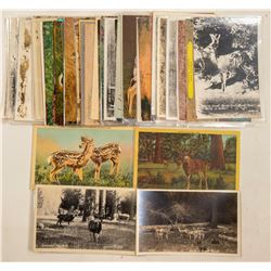 Deer Postcards  (91328)
