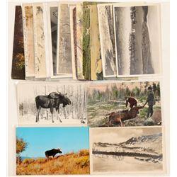 Moose, Caribou & Antelope Postcards  (91330)