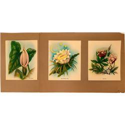 Ted Mundorff Hawaiian floral prints  (116860)