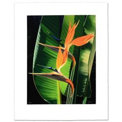 """""""Bird Of Paradise"""" Limited Edition Giclee by Brian Davis, Numbered and Hand Signed with Certificate"""