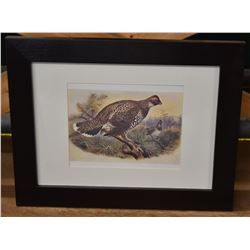 2 Spruce Grouse Prints