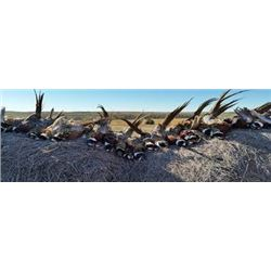 Premium SD NWTF Pheasant hunt for up to 3 hunters (Lodging and Meals included)