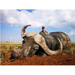 South African Plains Game Safari, 3 Hunters, 9 days/7 Days Hunting, 1 Blesbuck/Springbuck per Hunter