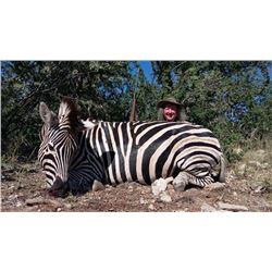 South African Safari 2 Hunters, 10 Day, $500 credit/hunter, 1 cull Giraffe & 1 Zebra inc. per hunter