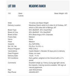 Meadows Ranch - 110 Steers