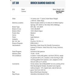 Broken Diamond Ranch Inc - 210 Steers