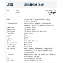 Surprise Creek Colony - 195 Heifers