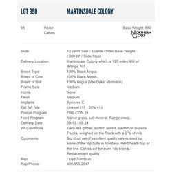 Martinsdale Colony - 95 Heifers