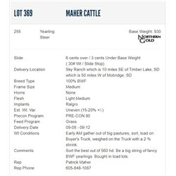Maher Cattle - 255 Steers