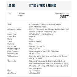 Flying V Farms & Feeding - 220 Steers