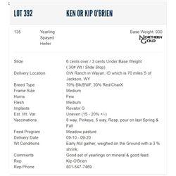 Ken or Kip O'Brien - 135 Spayed Heifers