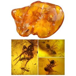 Baltic amber with preserved ants and spider, approx. 44 million years old, from Kaliningrad, Russia.
