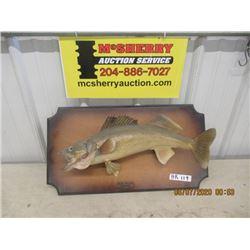 "Mounted Pickeral Fish 24"" Long"