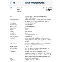 Broken Diamond Ranch Inc - 120 Weaned Heifers