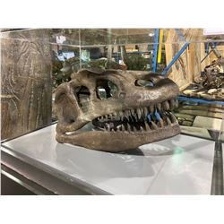 LIFE SIZE ALLOSAURUS SKULL IN GLASS COVERED TRANSPORT DISPLAY CASE