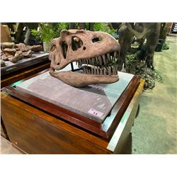 LIFE SIZE YANGCHUAMOSAURUS SKULL IN TRANSPORT DISPLAY CASE