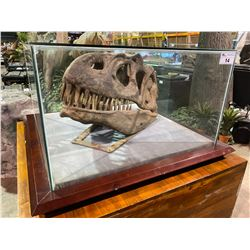 LIFE SIZE YANGCHUAMOSAURUS SKULL IN GLASS COVERED TRANSPORT DISPLAY CASE