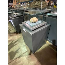 REAL SAUROPODA EGG IN GLASS COVERED TRANSPORT DISPLAY CASE