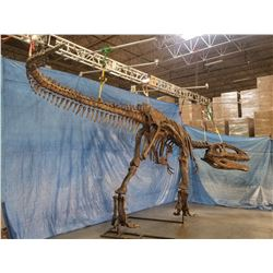 GIGANOTOSAURUS FULL SKELETON ON STEEL FRAME, FOUND IN ARGENTINIA FROM THE LATE CRETACEOUS PERIOD,