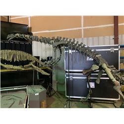 YUNNANOSAURUS FULL SKELETON ON STEEL FRAME WITH REAL BONE ELEMENTS, FOUND IN CHINA FROM THE EARLY