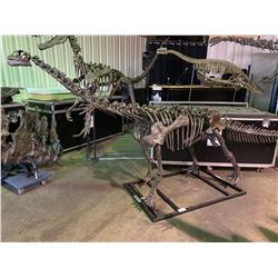 BELLUSAURUS FULL SKELETON ON STEEL FRAME, FOUND IN JUNGGAR BASIN OF CHINA FROM THE MIDDLE