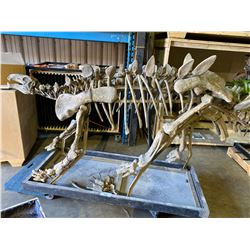 HUAYANGOSAURUS FULL SKELETON ON STEEL FRAME WOOD TRAY, STEGOSAURID FOUND IN CHINA FROM THE