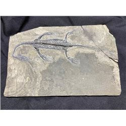 KEICHOUSAURUS SKELETON ON SLATE REAL DINOSAUR FOSSIL