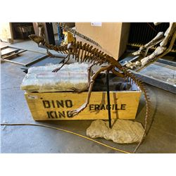 AGILISAURUS FULL SKELETON ON STEEL FRAME, FOUND IN ASIA FROM THE MIDDLE JURASSIC PERIOD