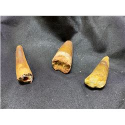 3 SPINASAURUS TEETH, REAL DINOSAUR FOSSILS