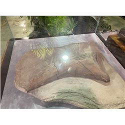 LIFE SIZE SAUROPOD CLAW IN GLASS COVERED TRANSPORT DISPLAY CASE