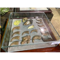 ASSORTED CLAWS, TEETH, FOOT PRINT, SKIN & FECESE IN GLASS COVERED TRANSPORT DISPLAY CASE