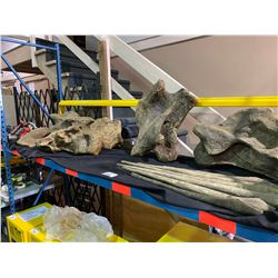 ASSORTED MAMENCHISAURUS NECK BONES FROM THE LATE JURASSIC PERIOD