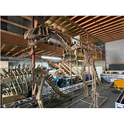 YANGCHUAMOSAURUS FULL SKELETON ON STEEL FRAME, THEROPOD FOUND IN CHINA FROM THE