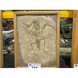 YANORNIS FOSSIL CASTS IN WOODEN FRAME