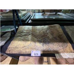 CAUDIPTERYX FOSSIL CAST