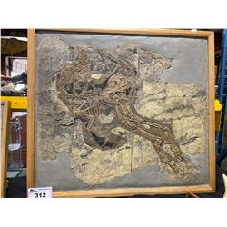 CAUDIPTERYX FOSSIL CASTS IN WOODEN FRAME