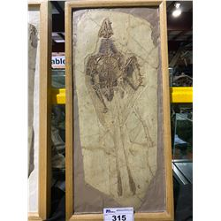 CONFUCIUSORNIS FOSSIL CASTS IN WOODEN FRAME