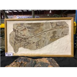 MICRORAPTOR FOSSIL CASTS IN WOODEN FRAME