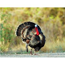 3 Day Guided Merriam Turkey for 1 Youth Hunter & 1 Adult Guardian on a New Mexico Private Ranch