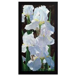 Enchanting Irises by Davis, Brian