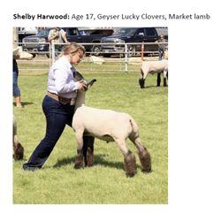 Harwood, Shelby - RESERVE Market Lamb