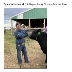 Harwood, Quentin - GRAND Market Beef