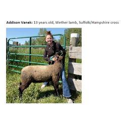 Vanek, Addison - Market Lamb