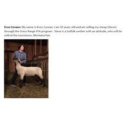 Corean, Enzo - Market Lamb