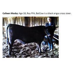 Mosby, Colleen - Market Beef